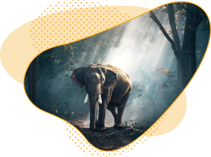 Intelligence collective lyon centre de formation elephant