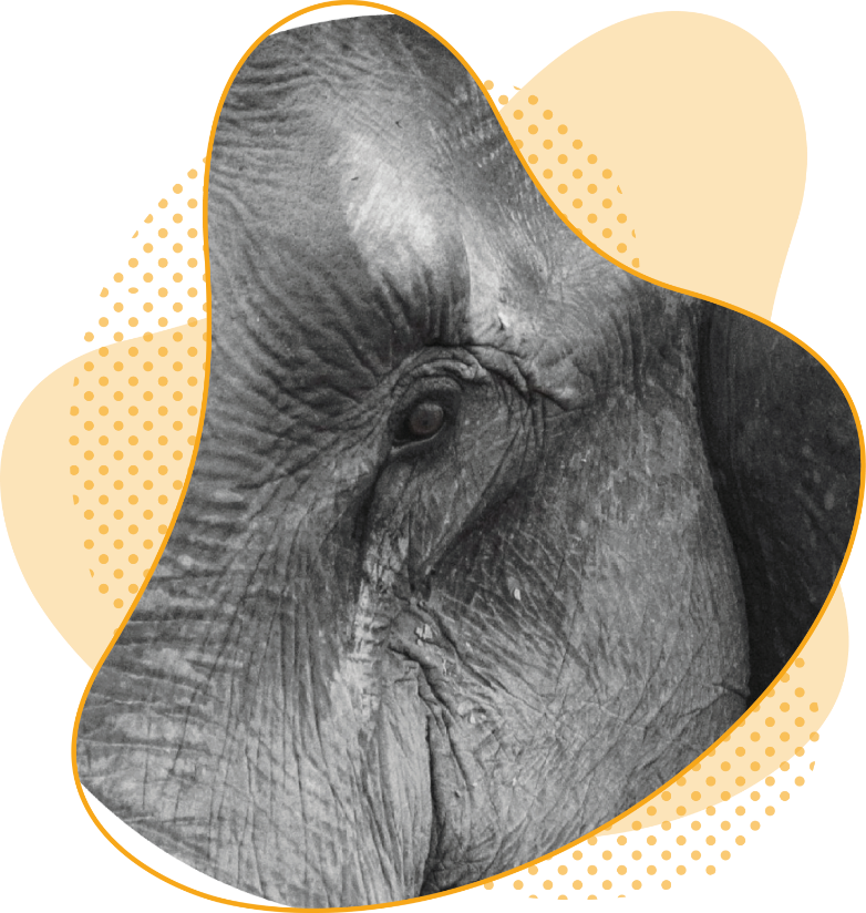 Qui sont elephant et intention le centre de formation en intelligence collective